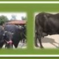 Central Institute for Research on Buffaloes, Hisar, Haryana