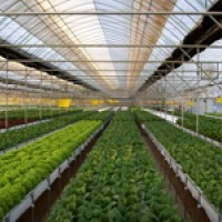 Training course in Soil-less Cultivation/Hydroponics