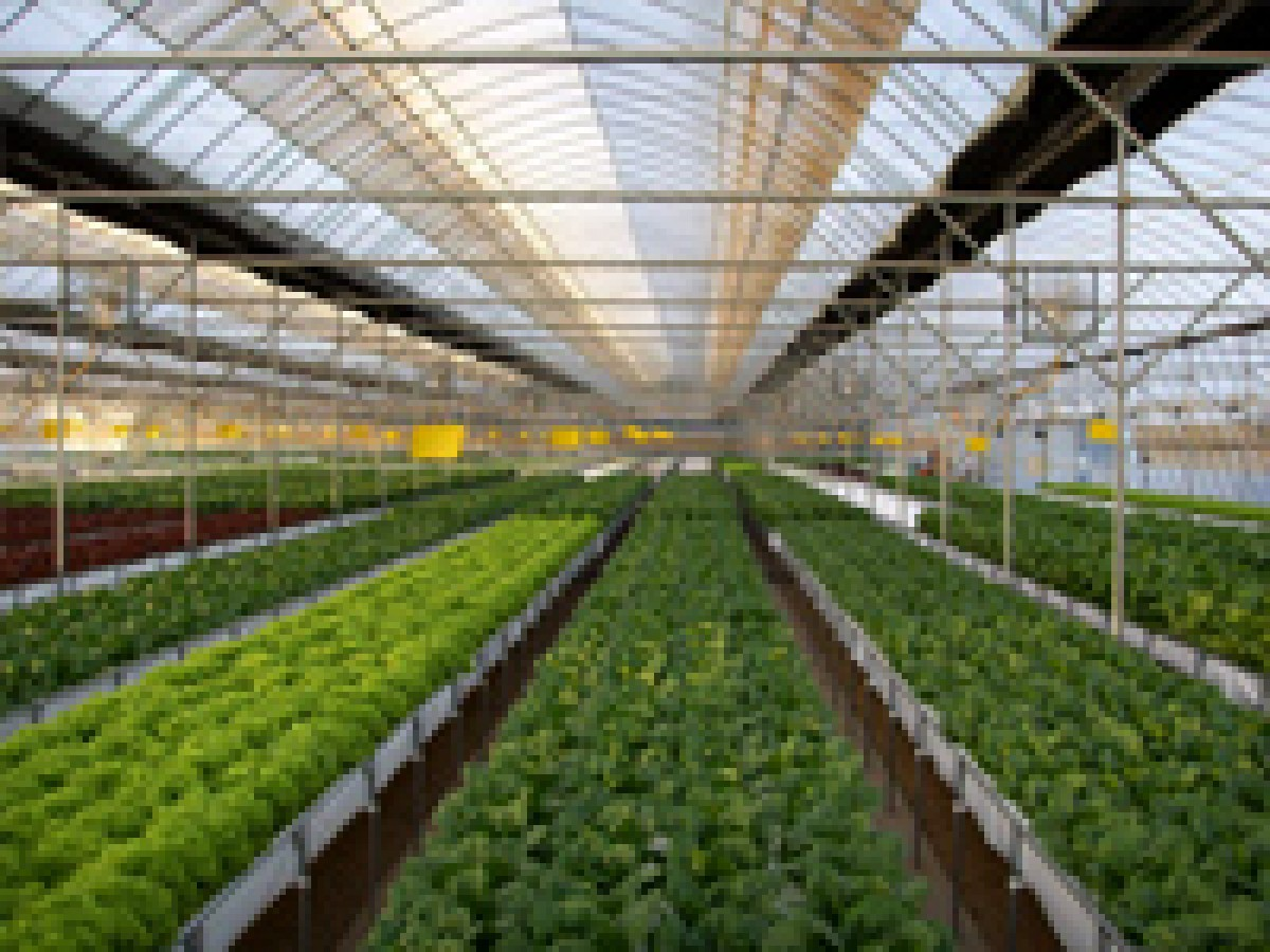 Training course in soil less cultivation hydroponics for Soil less farming